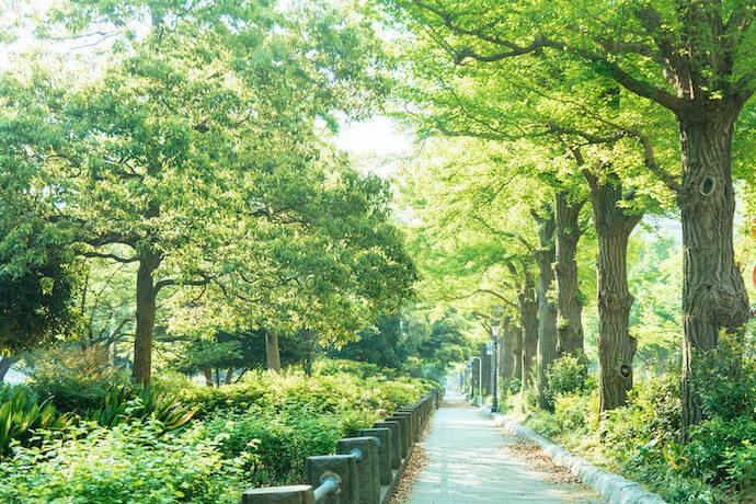 山下公園の新緑の道