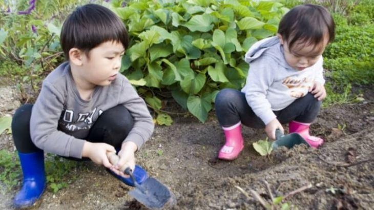 子どもの自然体験は減少している?現状と原因をわかりやすく解説