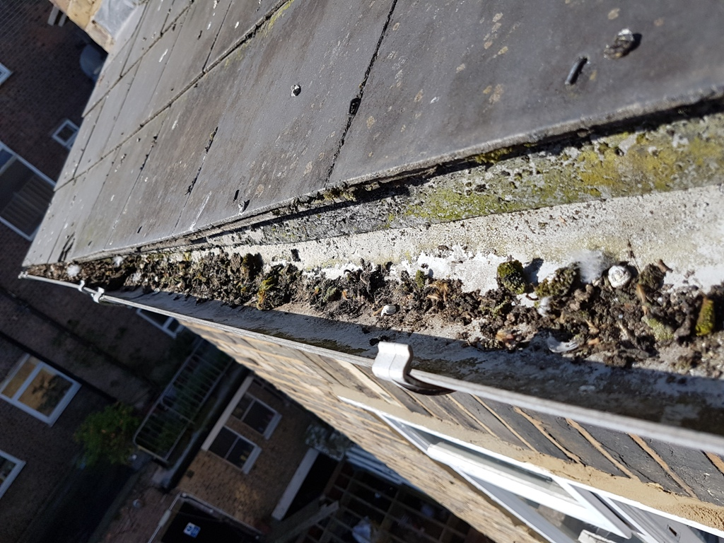 cleaning gutters via rope access