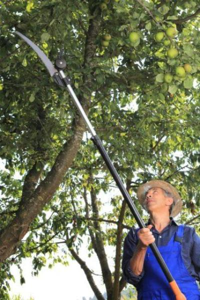 Getting the Best Pole Saw For Your Yard Maintenance – 2019 Edition