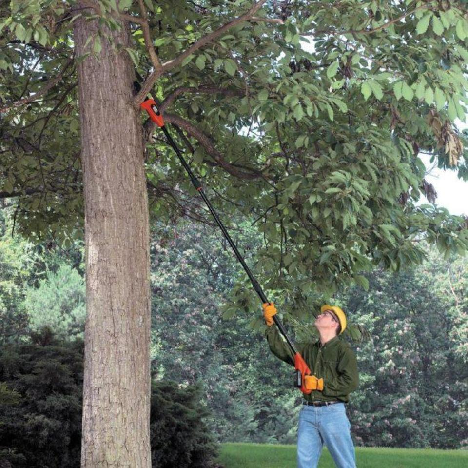 What is The Best Tree Pruner? Let This Guide Tell You!