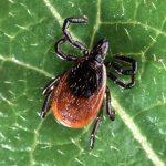殺人虫は『ヒアリ』の他にも…『マダニ』の感染症に注意!