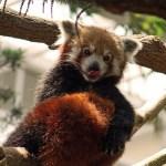 Firefox アドオン騒動…派生ブラウザーは問題なかったよ!