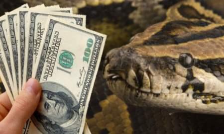 snake eats cash in nigeria jamb