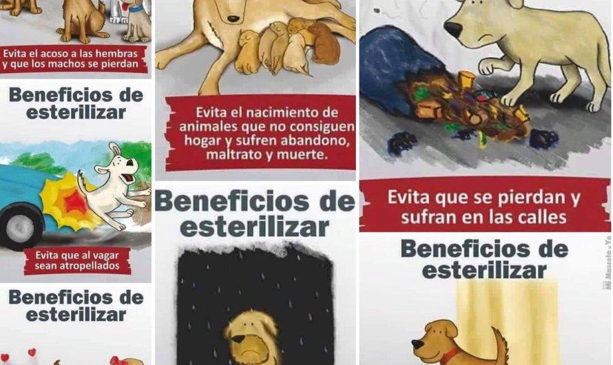 23 de Febrero. Día Mundial de la Esterilización Animal