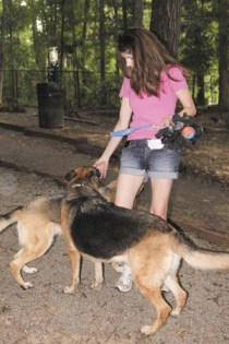 Samantha Suggs said her German Shepherds enjoy being able to run around in the shade at Brook Run Dog Park.