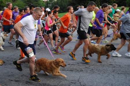 More than 400 people took part in the event, a fundraiser for Ahimsa, a nonprofit dedicated to helping abused animals.