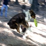Ryan Martin's dog Leila catches a Frisbee in the dog park on Nov. 11.