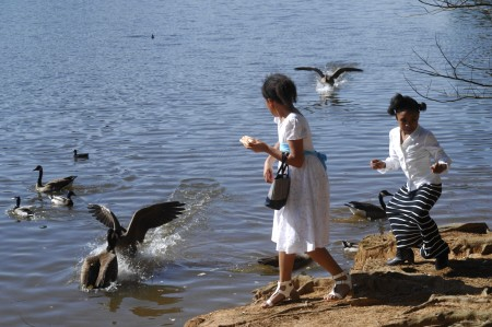 Morgan O'Keefe, 11, at left, and Kerston Moss, 8, feed the geese at Lake Murphey Candler.