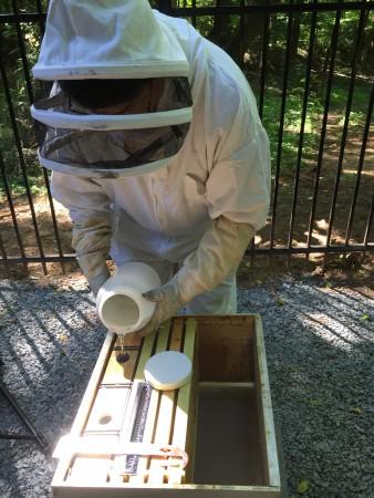 Sandy Springs Mayor Rusty Paul feeds the city's new bees.