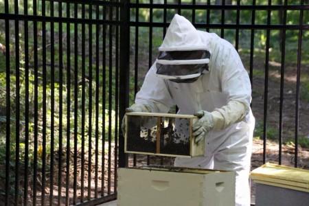 Sandy Springs Mayor Rusty Paul installs a colony of honey bees in Lost Corner Park.