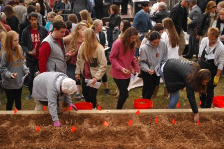 Many guests line up to plant bulbs at the Daffodil Project Children's Memorial Garden at Hammond Park Nov. 15. (Photo by Phil Mosier)