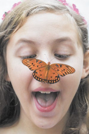 """Olivia Whitake, 10, takes delight in getting a close look at a """"Julia Longwing"""" while attending the annual Butterfly Festival at the Dunwoody Nature Center on Aug. 15."""