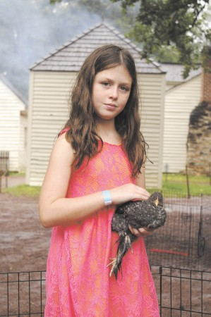 Atlanta History Center; Saturday September 26, 2015 12:30pm. Fall Folklife Festival. At the Little Red Barn Petting Zoo, Sophia Wetherbee (9yr) petting a Barred Rock Cochin Chicken.