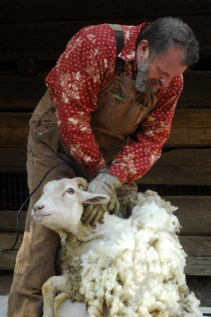 """Atlanta History Center; Saturday April 9, 2016 11:00am. """"Sheep to Shawl"""" event. Sheep shearing demonstration in the Smith Family Farm Barnyard. Scott Fuss [red shirt] shears """"Ida Mae"""" a Gulf Coast Native Sheep who lives at the Smith Farm year round. Assisting Fuss is Brett Bannor [hat]. Bannor is the animal care taker for the center."""