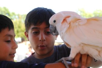 """Dunwoody Village Parkway; Saturday May 6, 2016 4:00pm. Seventh annual festival. Art, food, and kidz zone activities. Brothers (ltor) Alex Rodriguez (7yr), and Jack Rodriguez (8yr) enjoy petting an Umbrella Cockatoo """"Joey""""."""
