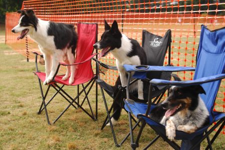 "Brookhaven Park; Saturday JUne 4, 2016 10:00am. Second annual, ""Bark in the Park"" event sponsored by Brookhaven Parks and Recreation Department. Vendors, food, and a frisbee dog performance. Dean Werts frisbee perfoming dogs resting before the show, (ltor) ""Tease"", ""Jenga"", and ""Limit""."