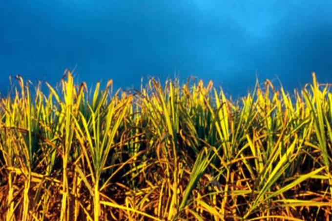 Biocombustíveis: país se comprometeu a cortar em 43% as emissões de gases do efeito estufa.