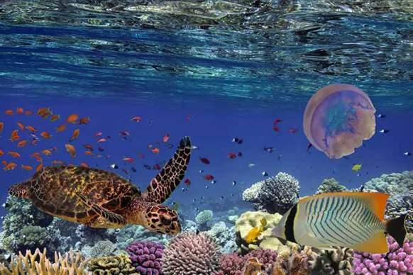Corais no Havaí (vlad61/Thinkstock)
