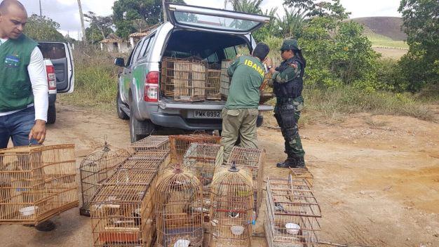Pássaros, aves e jabutis foram apreendidos e levados ao Centro de Triagem de Animais Silvestres, em Maceió