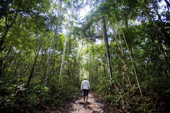 Manejo  sustentável  em floresta  de  Juruena (MT):  Antônio Bento de Oliveira caminha em busca de castanheiras em área da reserva comunitária do assentamento Vale do Amanhecer Marcelo Camargo/Arquivo/Agência Brasil