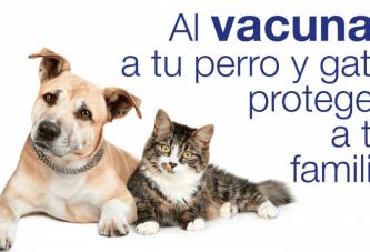 DEL 11 AL 17 DE MARZO INICIA CAMPAÑA DE VACUNACIÓN ANTIRRÁBICA EN TODO Q ROO
