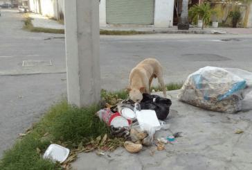 MUNICIPIO DE OTHÓN P BLANCO, DE LOS MÁS ABANDONADOS