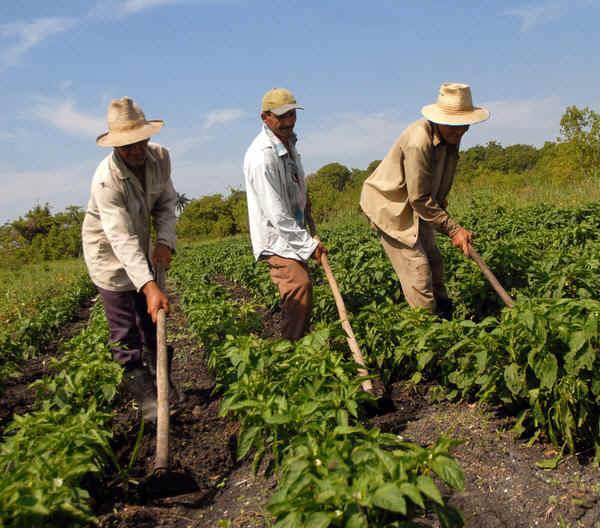 Beneficia la ceniza del Popocatu00E9petl, al campo  agricola.