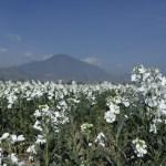 SECRETARÍA DEL CAMPO MEXIQUENSE CONVOCA A INGENIEROS AGRÓNOMOS PARA LABORAR EN DIVERSAS ÁREAS
