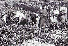 Photo of O vinho da minha terra