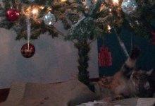 Photo of Um gato de Natal