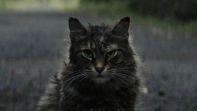 "Photo of ""Pet Sematary"""