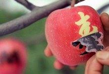 Photo of A história por trás de um melão que custa o mesmo que um carro