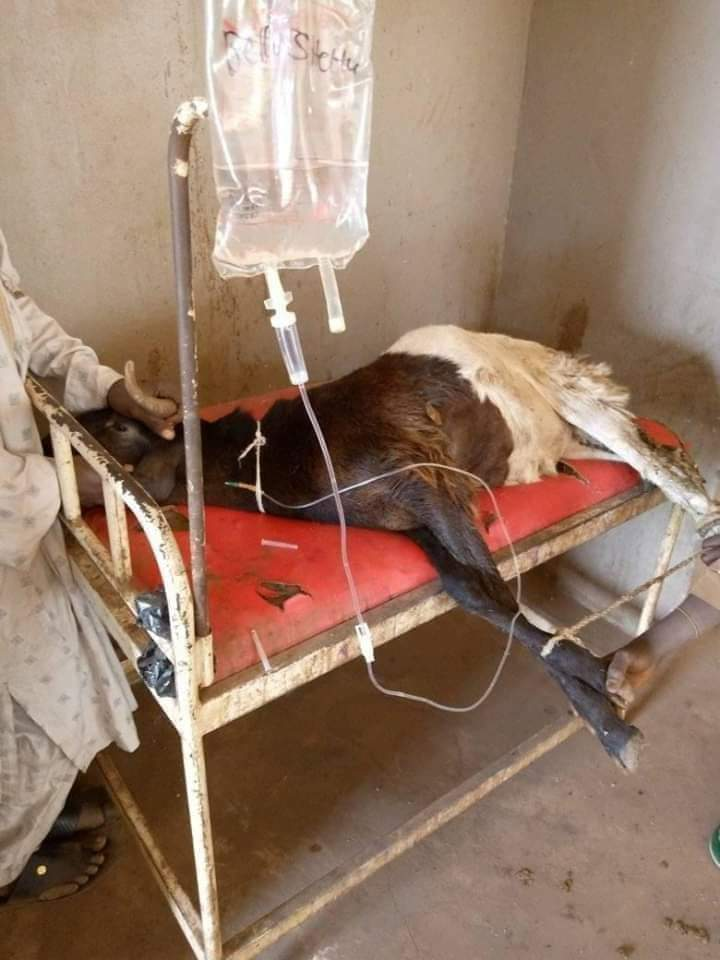 COVID-19: Ram tested positive, receiving treatment in Kano