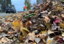 Kent residents and Council members agree: the leaves must leave