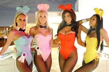 bunny16