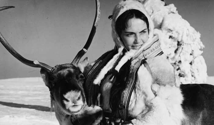 white-reindeer-1