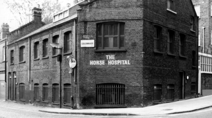 horse-hospital
