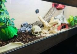 corn snake terrarium ideas - Greta Nanartaviciute