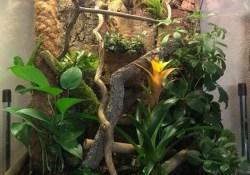 crested gecko terrarium ideas - Joanna Whitewick