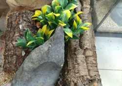 hognose snake terrarium ideas - Meag Hanss
