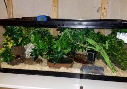 corn snake terrarium ideas - amanda payton