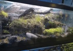 Blue tongue skink terrarium ideas - Braden Alexander