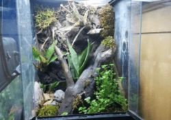 mourning gecko terrarium ideas - braden alexander