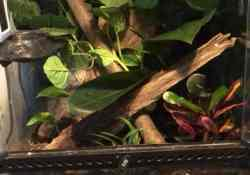 crested gecko terrarium ideas - enya crane