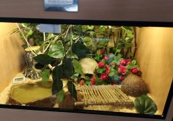 corn snake terrarium ideas - gavin brotherton2