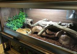 Ball python terrarium ideas - Hayleigh Perry