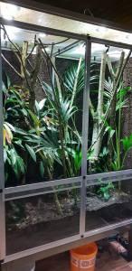 leaf-tailed gecko terrarium ideas - jan oo