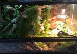 Ball python terrarium ideas - Joe Parnell
