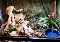 hognose snake terrarium ideas - katie wilkins